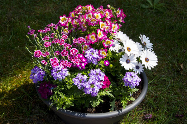 Watering your potted plants
