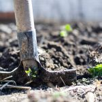 Shaping and preparing your garden