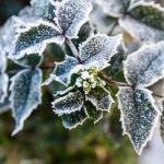 Winter Gardening Tips for Oregonians