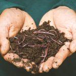 Ways to improve soil